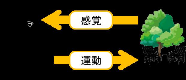 sensory_motor