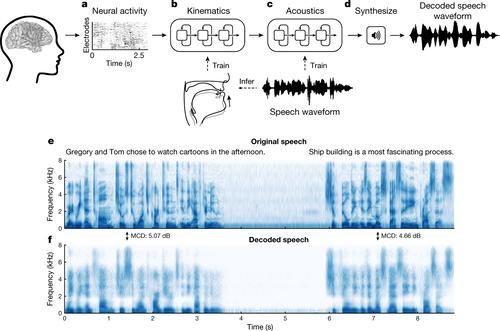 脳活動から声道の動きをシミュレートし音声合成(本人の声に近似)を生成する機械学習を用いたブレインマシンインタフェースを発表