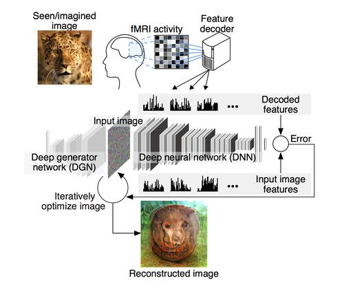 fMRIで測定した人間の脳活動のみから、その人が見ている画像を機械学習を用いて再構成する提案