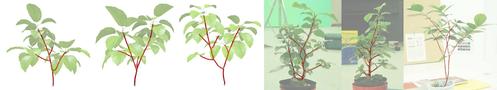 植物を複数方向から撮影した画像から、植物の3次元「枝構造」を正確に再現する手法