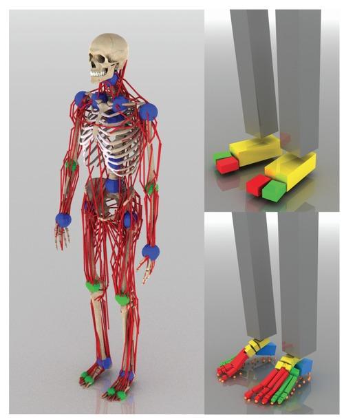 最大346の筋腱ユニットで人の動きをより忠実に再現するdeep learningを用いた物理シミュレーション