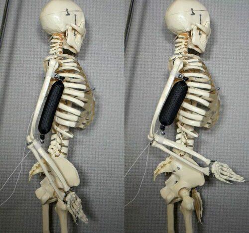 自然の筋肉よりも3倍強い外部圧縮機を必要としない柔らかい収縮する人工筋肉