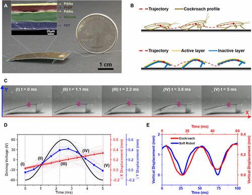 ゴキブリの身体能力を真似た小型ロボット